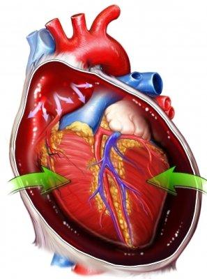 Езда на велосипеде положительно скажется на работе сердечнососудистой системы