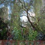 Ёлка из велосипедов в Сиднее